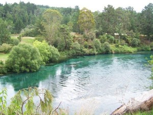 scenery-along-the-walk-how-blue-is-the-water-tokoroa